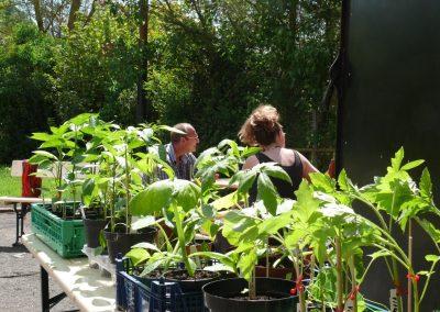 Altenbamberger Pflanzentauschboerse 1