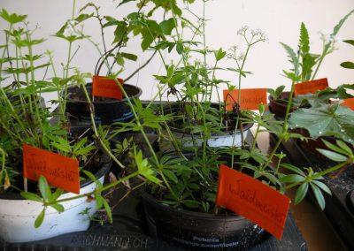 Altenbamberger Pflanzentauschboerse 2