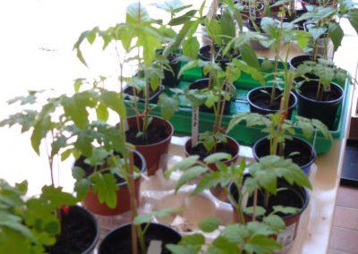 Altenbamberger Pflanzentauschboerse 3