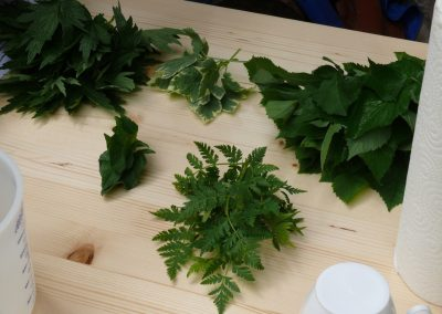 Altenbamberger Pflanzentauschboerse 9