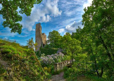 Altenbaumburg-Flieder-3939