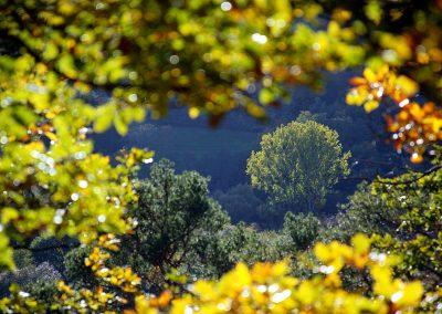 Herbst-04-005